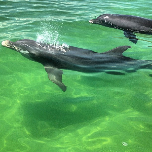a clear view while we swim with the dolphins in Panama City, FL