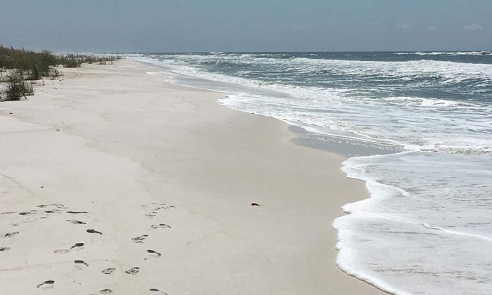 A photo showing the beauty of Shell Island in Panama City, Florida.