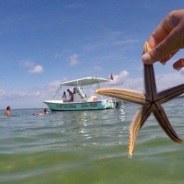 finding shells off of Shell Island, Panama City FL