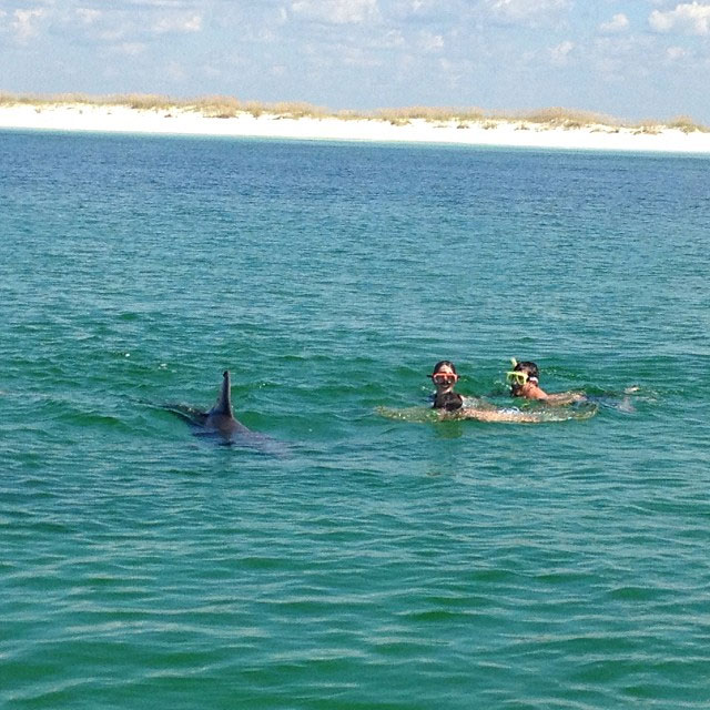 where to swim with the dolphins in Panama City Beach, FL